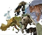 New overview of the status of European large carnivores