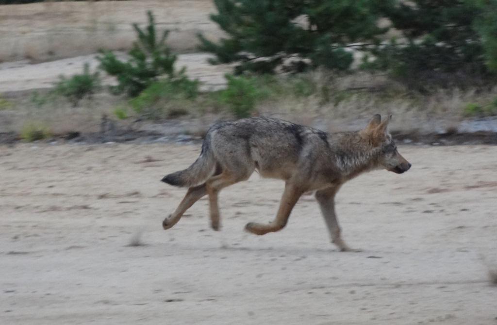 kontaktbüro wolf Faaborg-Midtfyn