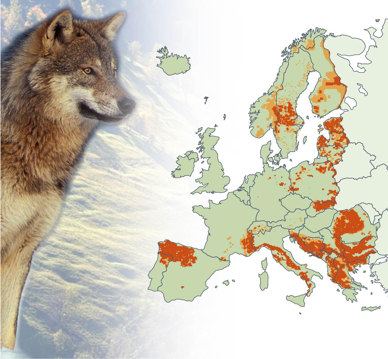 Wolf distributing